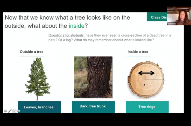 image about trees and tree cores
