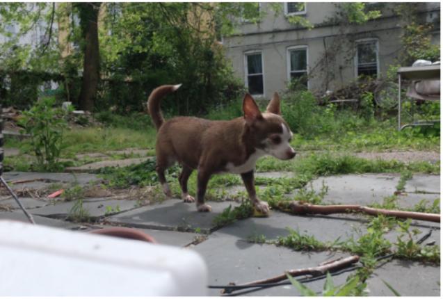 dog walking through a yard