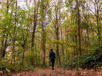 man walking through a forest