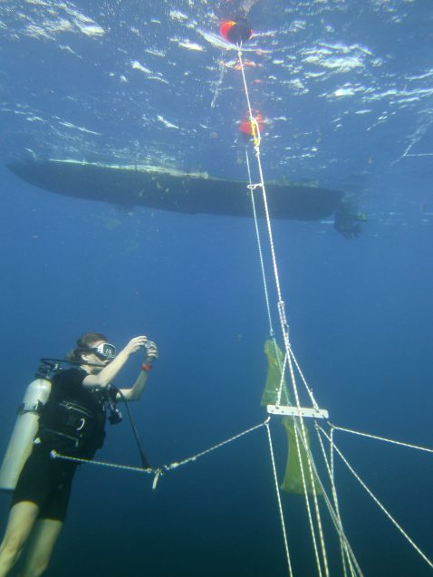 scientist collecting samples under water
