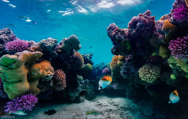colorful coral reef with fish