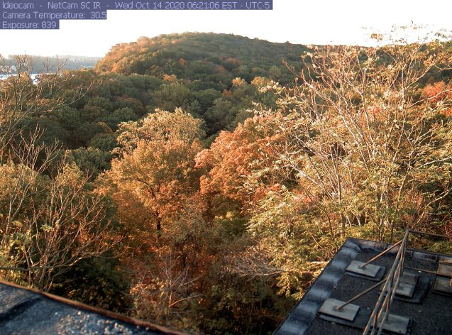 phenocam view of colorful treetops