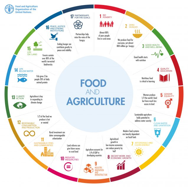infographic showing connections with various sdgs
