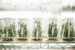 plants in glass containers