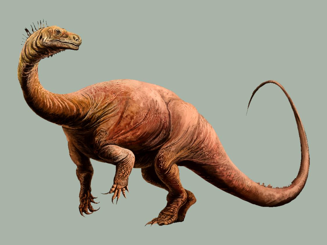 Plateosaurus engelhardti 2.