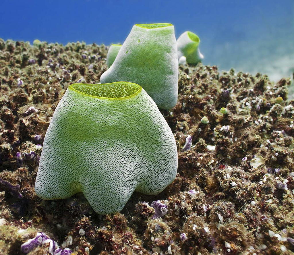 How Climate Change Is Affecting Sea Squirts In Antarctica