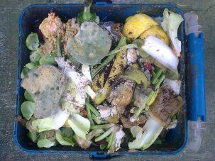 rotting food in a bin