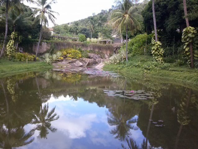 instituto terra ecorestoration project with pond and palm trees