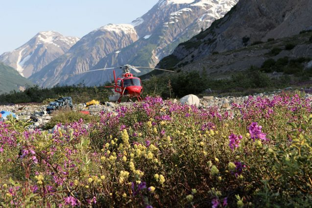A bright red helicopter lands in a field of yellow and purple wildflowers with large mountains in the background.