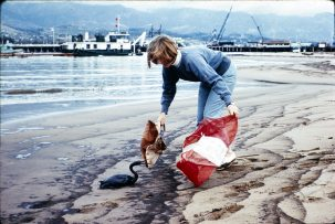 Oiled Western Grebe being collected from Santa Barbara Harbor, 1969. Get Oil Out (GOO) Collection, UC Santa Barbara Library.