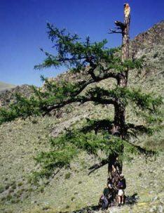 researchers near tree