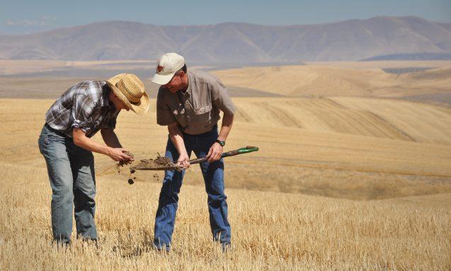 two men inspect a shovel-full of dirt in a farm field