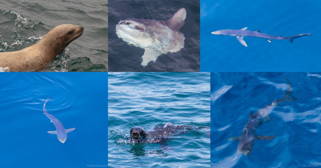 Pinniped and fish collage